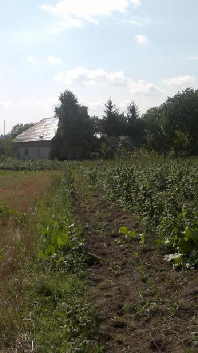 Пошук нерухомості продам землю Україна сторінка 56 3fa67441498aa